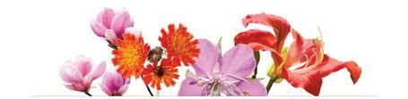 <b>INFINITE LOVE</b> | Flower essences for love & magnetism. - LOTUSWEI