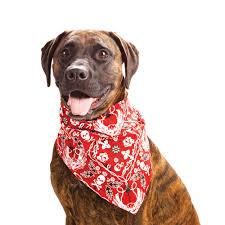 Πως διατηρούμε το σκύλο δροσερό;