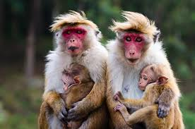 Image result for monkeys of the world