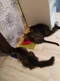 <b>Сухой корм Brit Care</b> Cat Cocco Gourmand беззерновой для ...