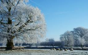 Image result for frost in the country