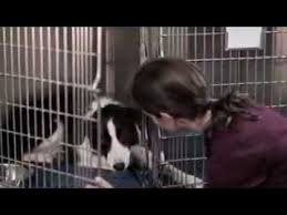 <b>Angel Dog</b> (2011) Trailer - YouTube