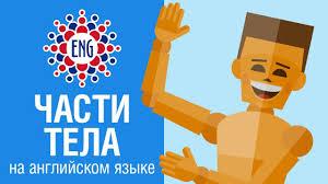 Части тела на английском языке | Для детей и начинающих ...