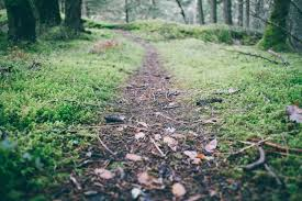 Image result for path free image