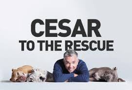 Image result for cesar to the rescue