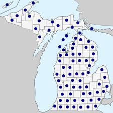 Fallopia convolvulus - Michigan Flora