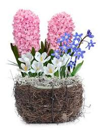 Image result for bulb garden in small space