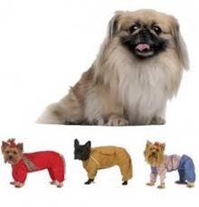 Купить <b>Комбинезон Тузик</b> для собак породы <b>пекинес</b> легкий ...