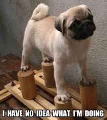 Pugs on Pinterest | Cute Pug Puppies, Funny Pugs and Dog Memes via Relatably.com