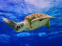 أكبر تجميع لأجمل صور من اعماق البحار (سبحان الله الخالق العظيم) - صفحة 2 Images?q=tbn:ANd9GcRVhgg6denQ-susCyfQ6XXXg48j21eV2oue-dfj9zeUtzgFvZNDgg