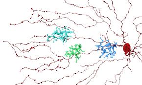 Image result for neuron shrinkage