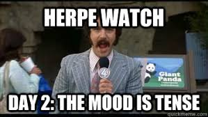Herpe WAtch Day 2: The mood is tense - panda watch - quickmeme via Relatably.com