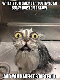 when you remember you have an essay due tomorrow and you havent  cat bath meme