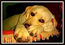 Νηστιοθεραπεία στον σκύλο...