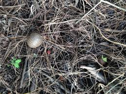 plant invasion non native plants contaminate south florida originally from asia air potatoes our first plant from hell grow sporadically over amelia earhart park in hialeah the urban paradise guild works to remove