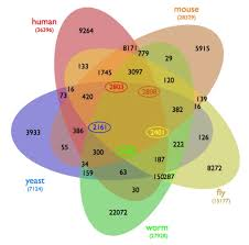 five way venn diagram of orthologous genes in five species    context