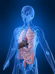 Image result for image tubuh manusia