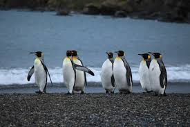 Image result for penguin