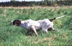 Ποια είναι η πρώτη επιλογή σκύλου για το περδικοκυνήγι;