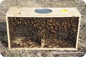 Image result for package of bees