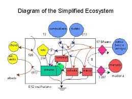 diagram of the simplified ecosystemslide