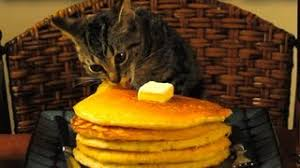 Image result for cats eating pancakes