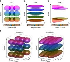 The representation of <b>colored</b> objects in macaque <b>color</b> patches ...