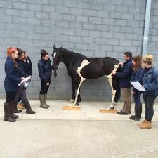careers webchat live horse and hound reaseheath college careers webchat live horse and hound