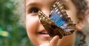 <b>Butterfly</b> Pavilion