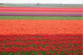 أجمل حدائق الورود,حدائق من الورود,مدينة الورد,دنيا الأزهار,عالم الورود,زهور بكل الألوا images?q=tbn:ANd9GcR