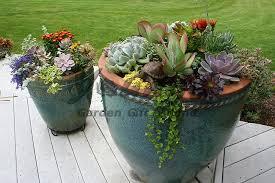 potted plants patio succulents