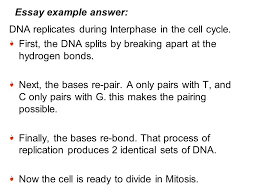 genetics  a  describe how mendel developed his theories of    essay example answer  dna replicates during interphase in the cell cycle  first  the