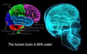 Hal-hal Yang Dapat Merusak Otak