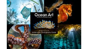 Ocean Art 2020 <b>Winners</b> Announced!