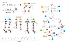 file citric acid cycle v  svg   wikipediafile citric acid cycle v  svg