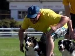Видеозаписи SledDogSport | ошейники, шлейки для собак.