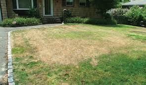 Image result for brown lawn