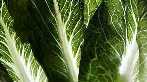 Romaine lettuce from California linked to E. coli outbreak that has ...
