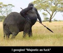 Gorillephant | Majestic as Fuck | Know Your Meme via Relatably.com