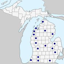 Bromus squarrosus - Michigan Flora