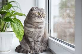 10 Reasons <b>Cats</b> Love Windows
