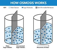 What is <b>Reverse Osmosis</b> (<b>RO</b>)? - <b>RO</b> FAQs | Hey Culligan