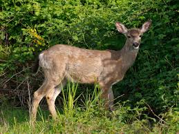 <b>Deer</b>-Resistant <b>Plants</b> and <b>Flowers</b>: Keep <b>Deer</b> Out of Your Garden ...