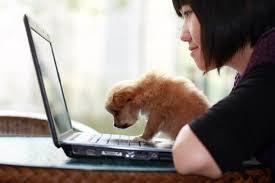 buy essay online cheap dog fighting   dailynewsreports   web fc  combuy essay online cheap dog fighting