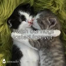 Gallery for - cute couple animal memes via Relatably.com