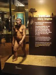 Resultado de imagem para Fóssil Lucy
