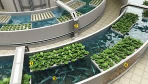 Image result for hydroponics commercial