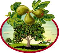 Image result for free clipart of a fig tree