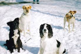Why do dogs <b>love snow</b>?