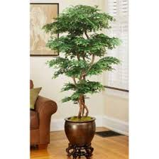 officescapesdirect 6 pagoda ming aralia silk tree artificial plants for office decor